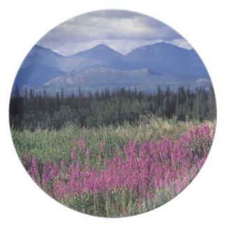 North America, Canada, Yukon. Fireweed blooms Plate
