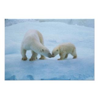 North America, Canadian Arctic. Polar bear and Art Photo