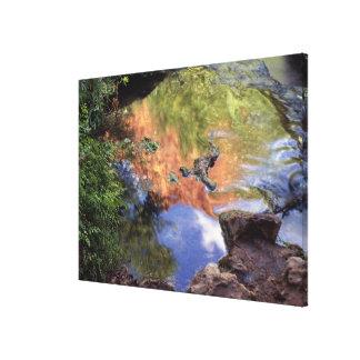 North America, U.S.A., Arizona, Havasu Canyon, 3 Canvas Prints