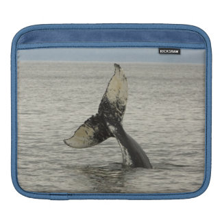 North America, USA, AK, Inside Passage. Humpback iPad Sleeve