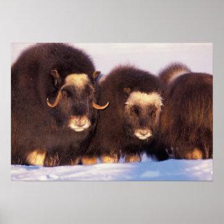 North America, USA, Alaska, Arctic Circle, Posters