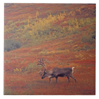 North America, USA, Alaska, Denali NP, Tundra. Tile