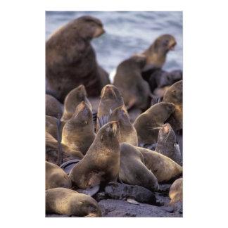 North America, USA, Alaska. Endangered Photo Print