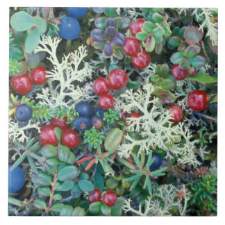 North America, USA, Alaska, Landscape, berries Tile