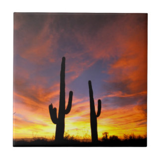 North America, USA, Arizona, Sonoran Desert Tile