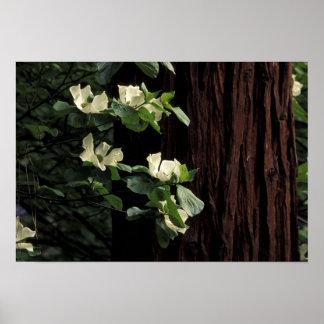 North America, USA, California, Yosemite 2 Poster