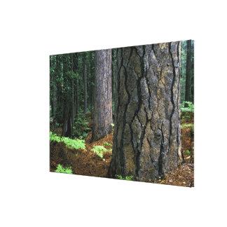 North America, USA, California, Yosemite 3 Canvas Print