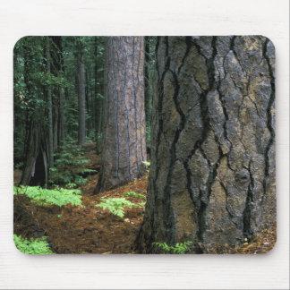 North America, USA, California, Yosemite Mouse Pad
