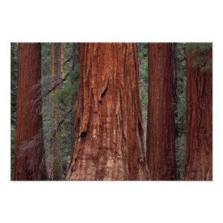 North America, USA, California, Yosemite NP, Photo Art