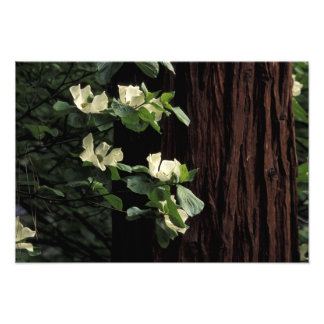 North America, USA, California, Yosemite Photo Print