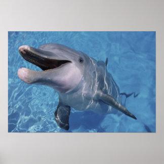 North America, USA, Hawaii. Dolphin 3 Poster