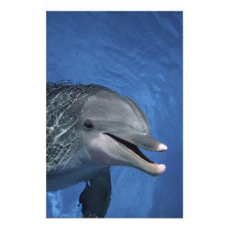 North America, USA, Hawaii. Dolphin Photo Print