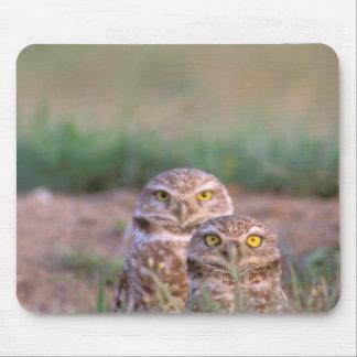 North America, USA, Oregon. Burrowing Owls 2 Mouse Pad