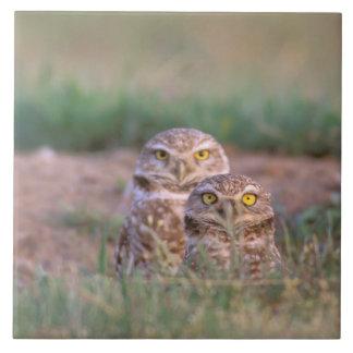 North America, USA, Oregon. Burrowing Owls 2 Tile