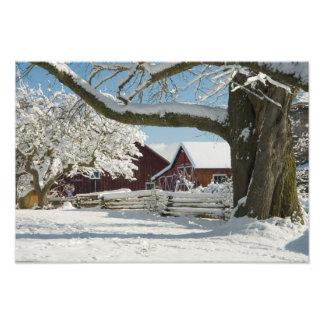 North America, USA, WA, Whidbey Island. 2 Art Photo