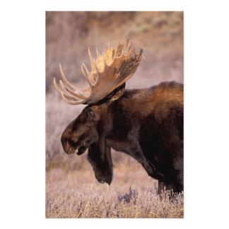 North America, USA, Wyoming, Grand Teton NP, Photo