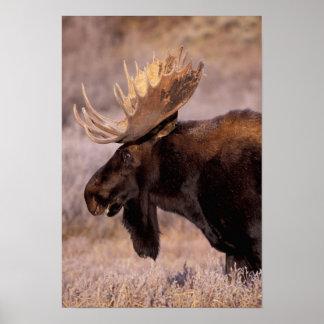 North America, USA, Wyoming, Grand Teton NP, Poster