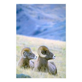 North America, USA, Wyoming, Yellowstone 2 Photo Print
