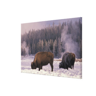 North America, USA, Wyoming, Yellowstone NP, Gallery Wrapped Canvas