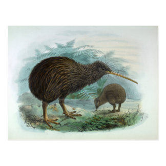 North Island Brown Kiwi Vintage Bird Illustration Postcard
