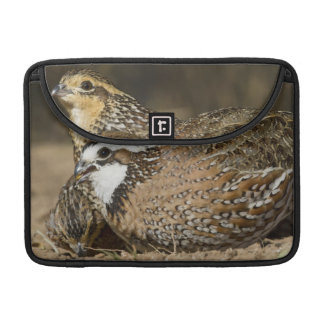 Northern Bobwhite quail babies at pond for drink Sleeve For MacBooks