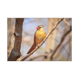 Northern Cardinal Gallery Wrapped Canvas