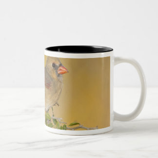 Northern Cardinal female perched on branch Two-Tone Coffee Mug