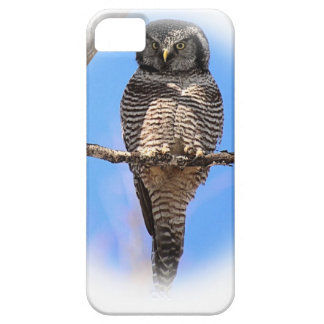 Northern Hawk Owl 4A iPhone 5 Covers