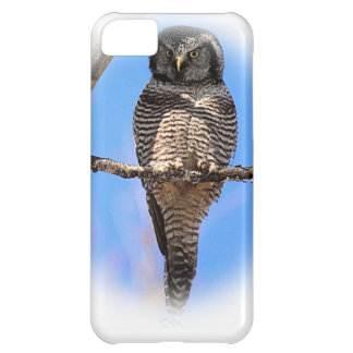 Northern Hawk Owl 4A iPhone 5C Case