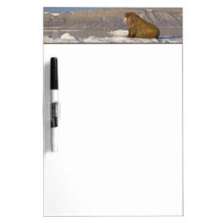 Norway, Svalbard, Edgeoya Island, Walrus Dry Erase Board