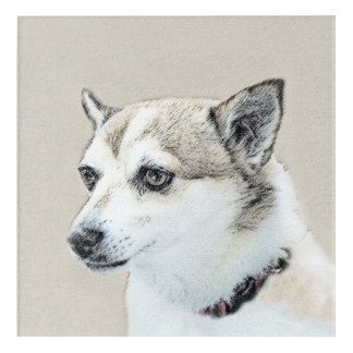 Norwegian Lundehund Acrylic Wall Art
