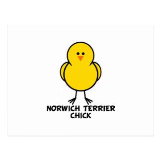 Norwich Terrier Chick Postcard