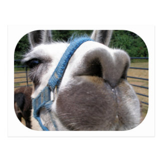 Nosy Llama Postcards