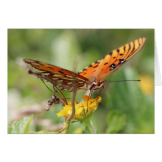 Note Card, Butterfly on yellow flower - Blank