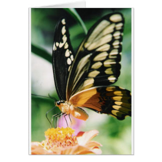 Note Card: Fairy Dance Note Card