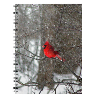 notebook with photo of male cardinal