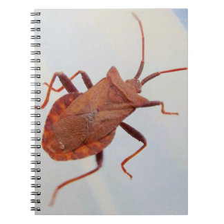 Notebook With Photos (80 Pages Insects
