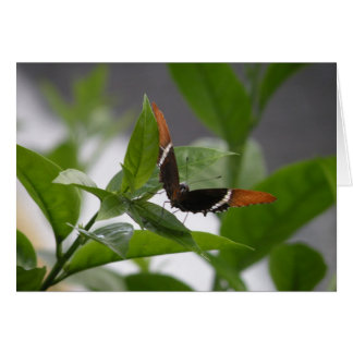 notecard butterfly1 note card