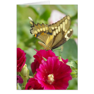 Notecard with Swallowtail Butterfly Note Card