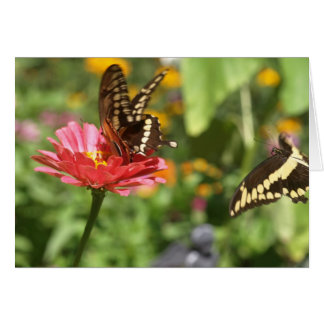 Notecard with Two Swallowtail Butterflies
