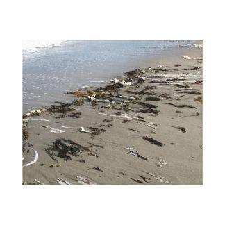 Nova Scotia seaweed & ocean.Paradise photo canvas Stretched Canvas Print