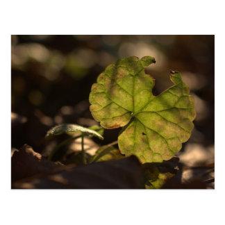November Sun CC0303 Postcard