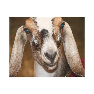 Nubian Dairy Goat Doe White Stripe Caprine Stretched Canvas Print