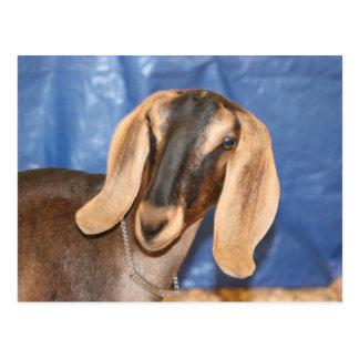 Nubian doe head against blue post cards