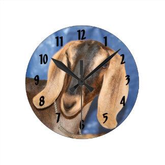 Nubian doe head against blue wall clocks
