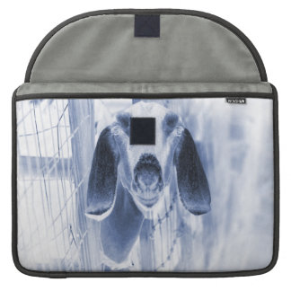Nubian doe head on invert sleeves for MacBook pro