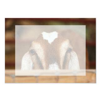Nubian doe peeking over wooden rail personalized invitations