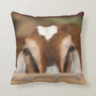 Nubian doe peeking over wooden rail throw cushions