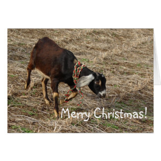 Nubian Goat, Merry Christmas! Greeting Card