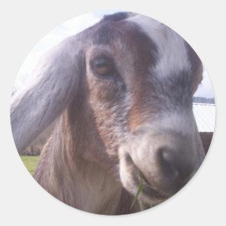 Nubian Goat Round Sticker